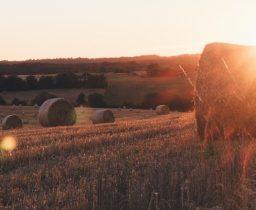 Землі сільськогосподарського призначення: законодавчі зміни в сфері АПК — чи покращиться становище аграріїв?
