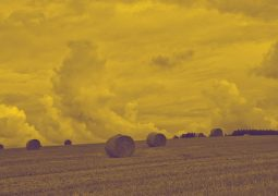 Ринок землі в Україні 2021: аналіз законів та проектів, децентралізація, договори оренди і суборенди, державна реєстрація прав на землю, держземкадастр, планування та використання земель, антирейд